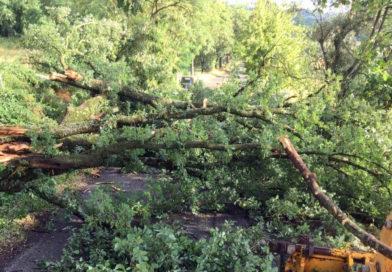 Terni, super lavoro della Provincia per rimuovere dalle strade centinaia di alberi sradicati dal maltempo
