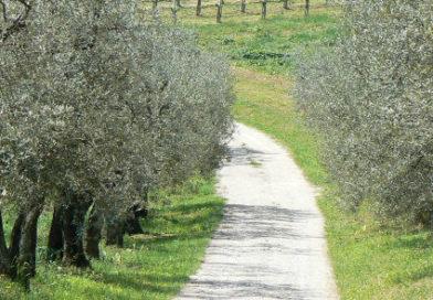 """Lugnano in Teverina, una due giorni per celebrare l'""""Olea Mundi"""""""