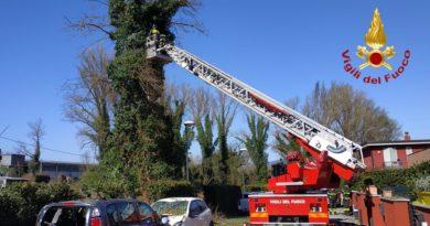 Narni, alberi su 4 autovetture a causa del vento: Danni per migliaia di euro